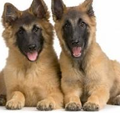 Training Sniffing Dogs