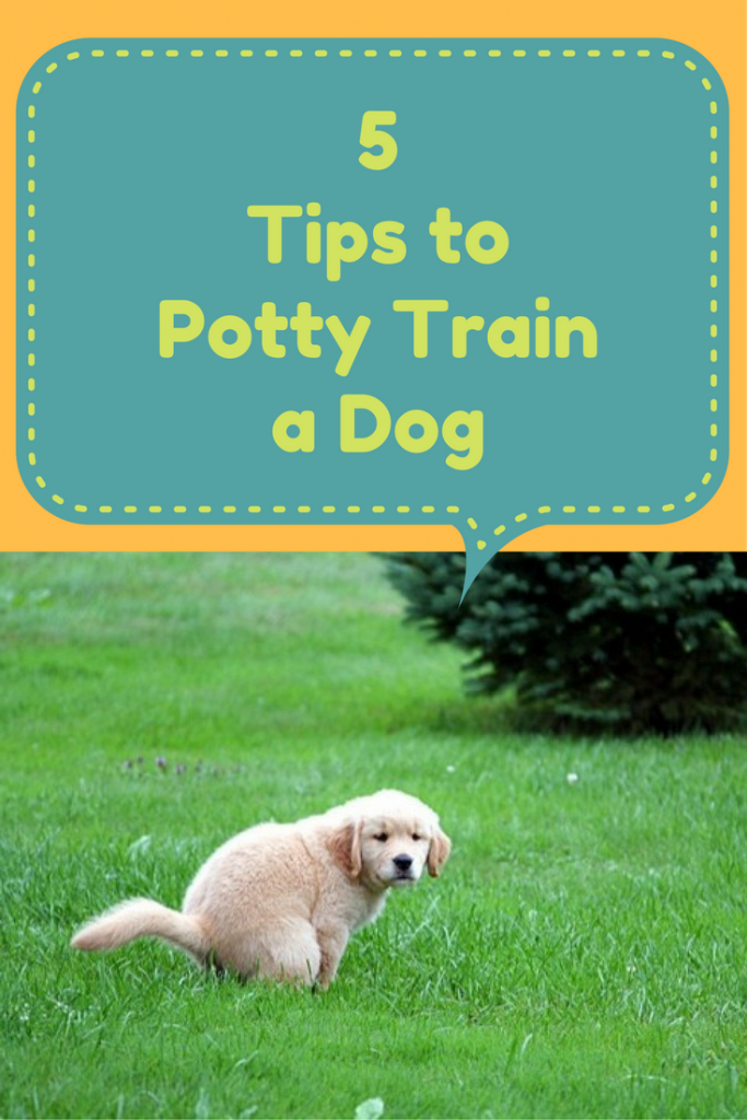 5 Tips to Potty Train a Dog