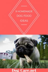 9 dog food ideas